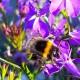 ET_151217_Foto_Blumen_und_den_Bienen_Knappe_Bild1